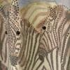 pull casamia zèbre avec manches 3/4 pour dame EN PROMO